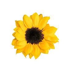 Essere BIO Dětský krém s výtažky slunečnice a arganu 150 ml